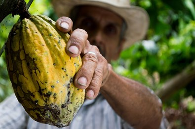 How can AgroCares technology help to maintain the soil for cacao production?