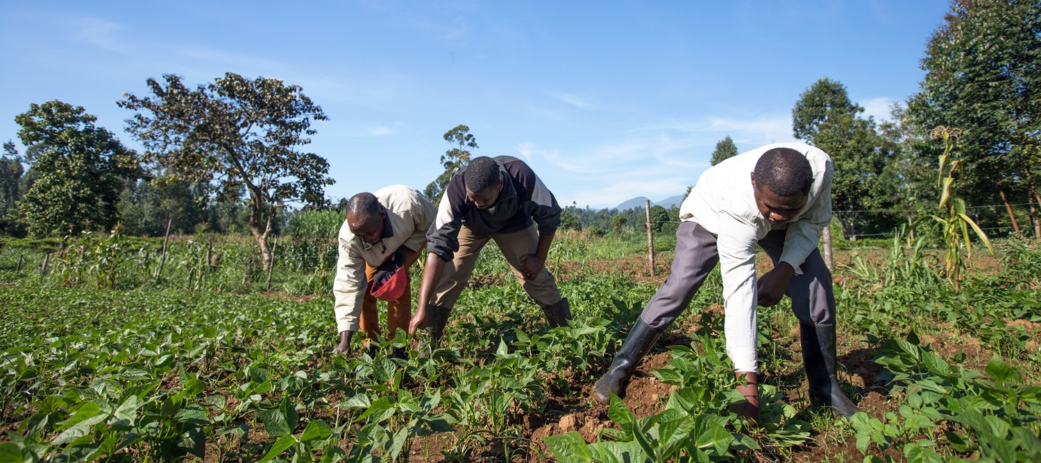 Mercy Corps investigates factors that drive soil testing by smallholders