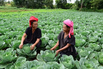 Innovative technology for Farmers in Myanmar